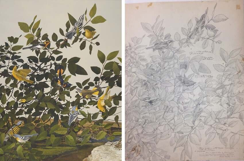 Painting of birds and sketch for painting