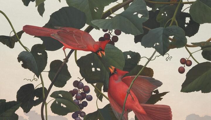 Cardinal, 1985