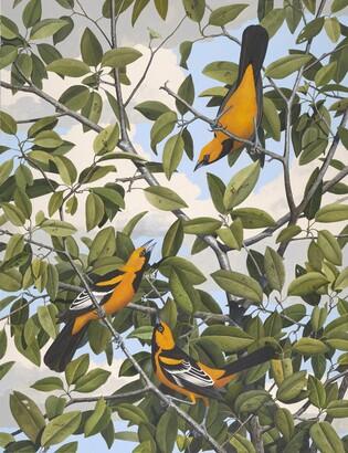Stuart Gentling (1942–2006), Scott Gentling (1942–2011), Lichtenstein's Oriole, ca. 1981-1985