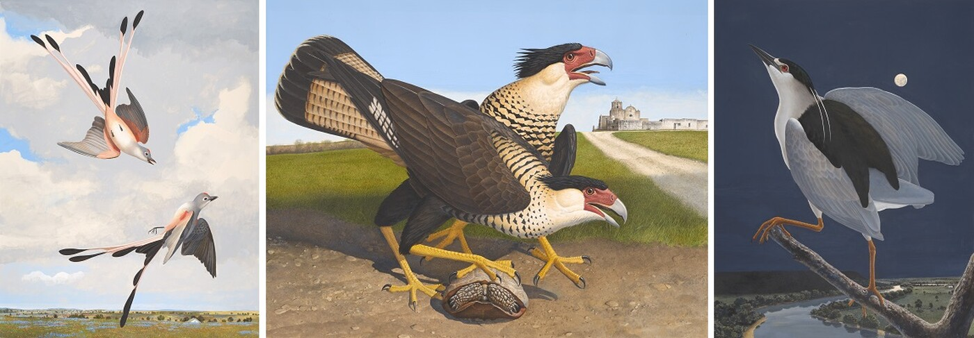 Three works on paper depicting Texas birds