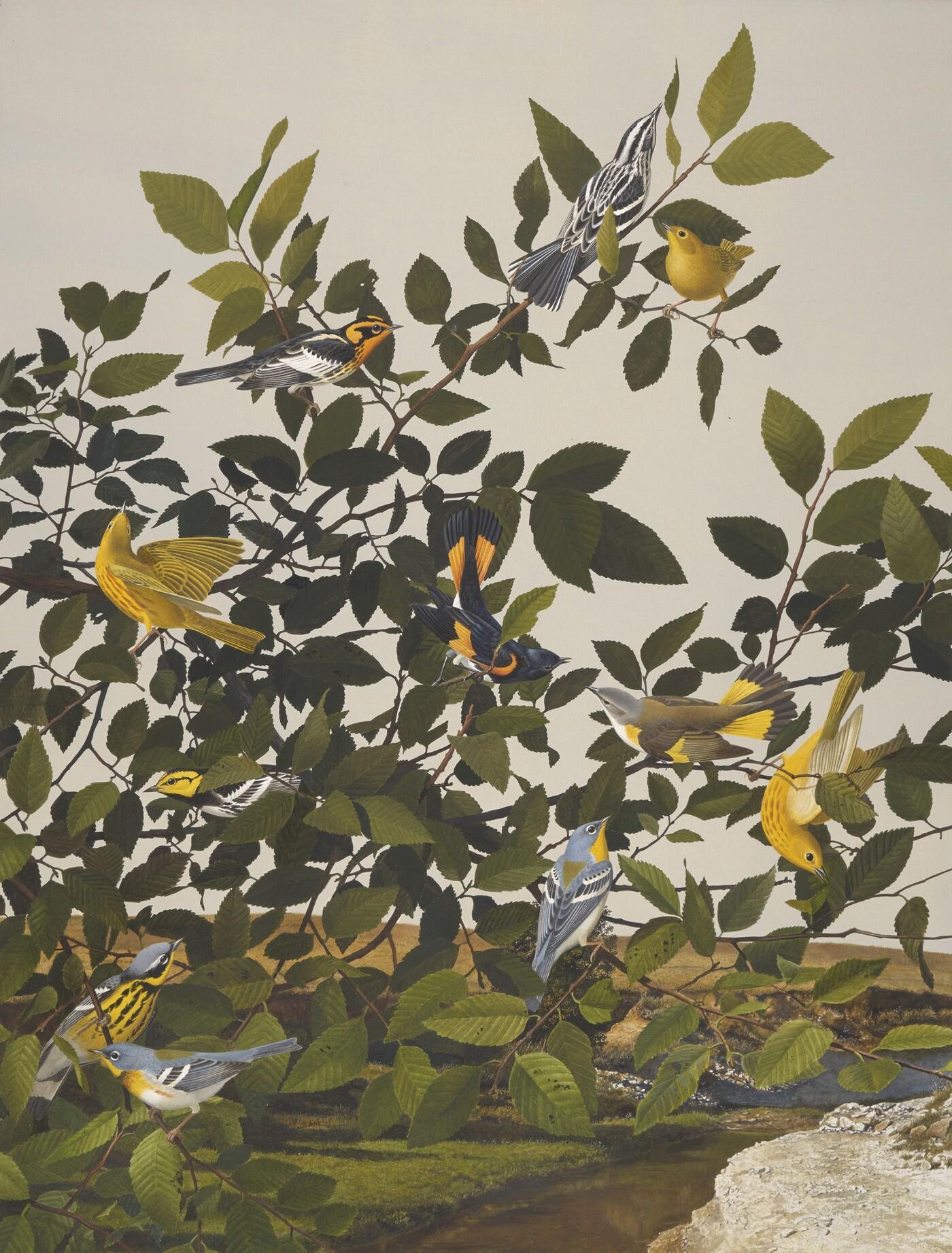 Stuart Gentling (1942–2006), Scott Gentling (1942–2011), Six Migrant Warbler Species and the Golden Chick Warbler, 1985