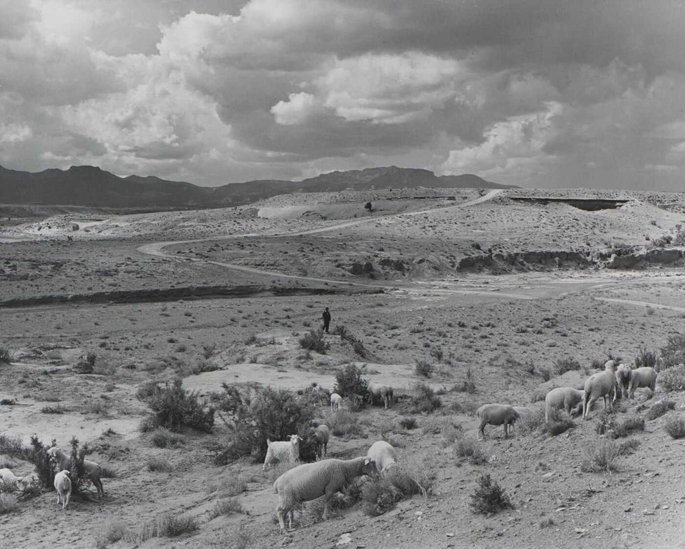 Laura Gilpin (1891–1979), The Little Shepherd, 1950