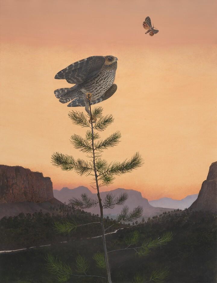 Flammulated Owl, 1983
