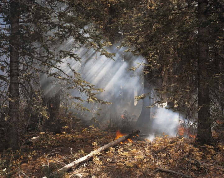 Laura McPhee (b. 1958), Understory Flareups, Fourth of July Creek, Valley Road Wild Fire, Custer County, Idaho, 2005, 2005, Dye coupler print