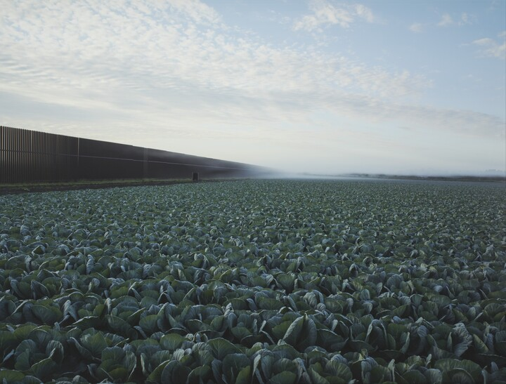 Richard Misrach (b. 1949), Cabbage Crop and Wall, Brownsville, Texas, 2015, Inkjet print