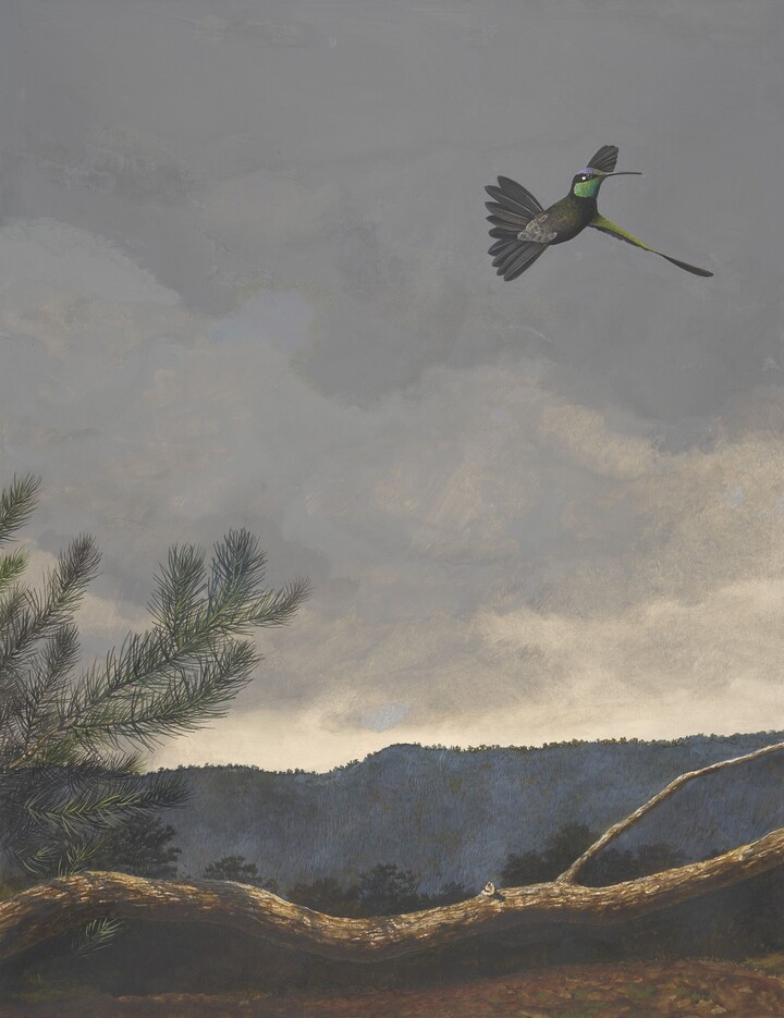 Stuart Gentling (1942–2006), Scott Gentling (1942–2011), Rivoli's Hummingbird (Magnificent Hummingbird), 1981