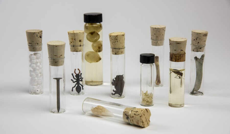 Photograph of 7 corked glass vials with specimens in them
